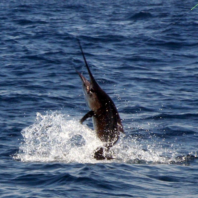 costa rica fishing trips